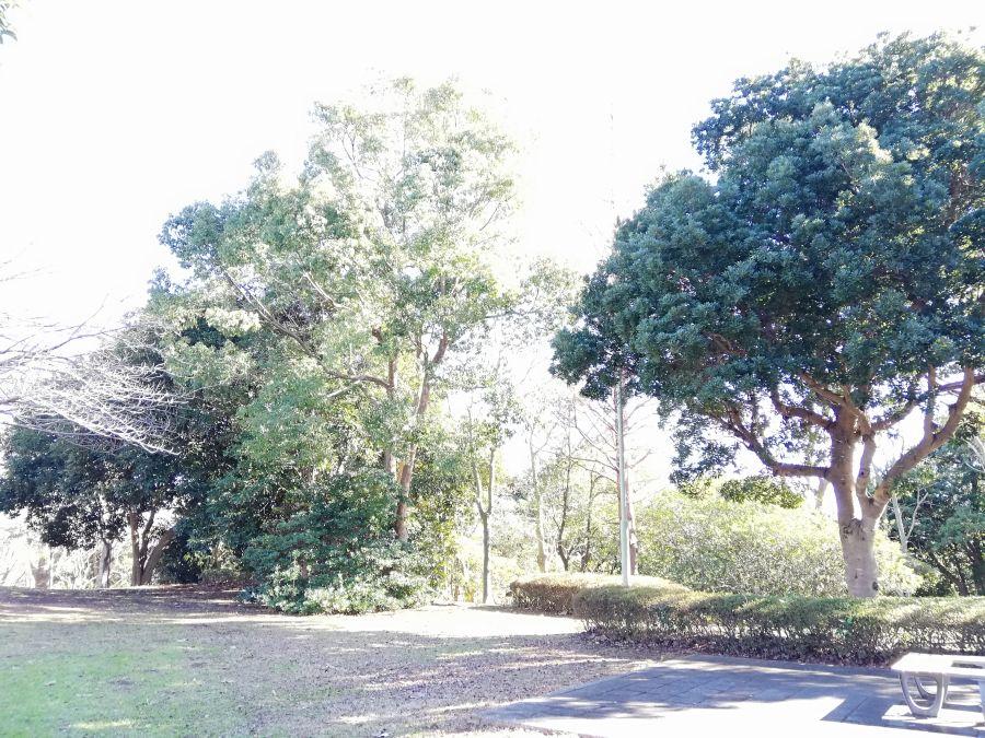 大崎台公園の木