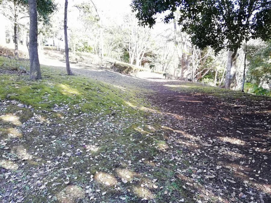 大崎台公園の地面