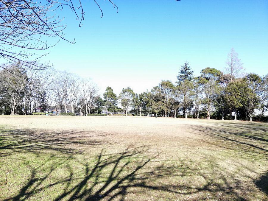 大崎台公園の全景