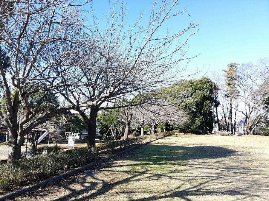 大崎台公園の桜