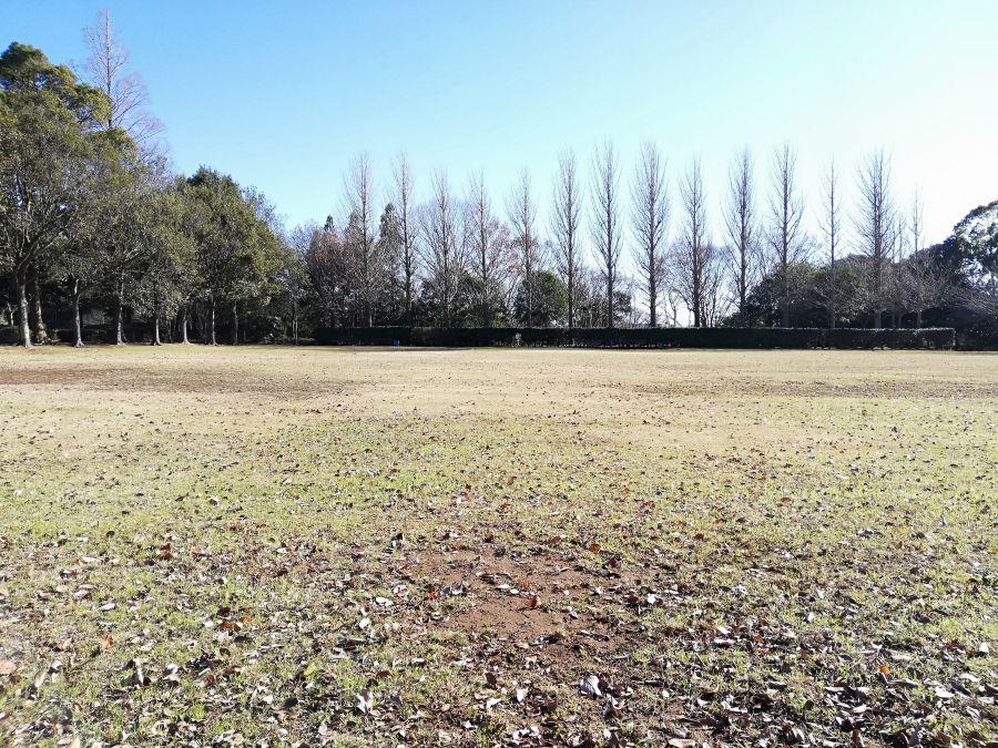 大崎台公園の芝生