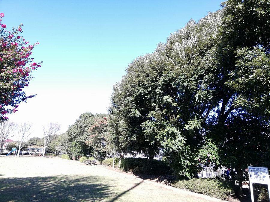 若宮台公園の木たち