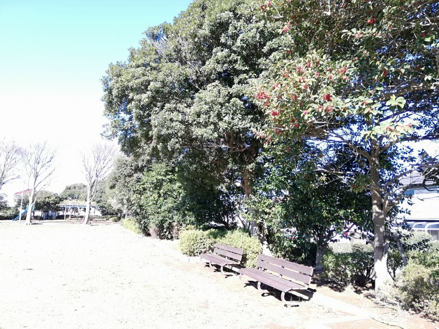若宮台公園のベンチ