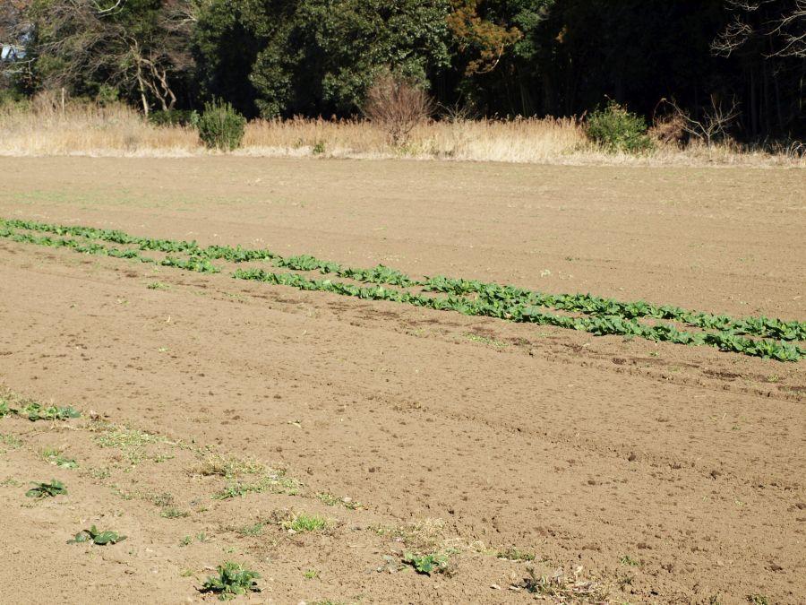 サンナンファームの畑