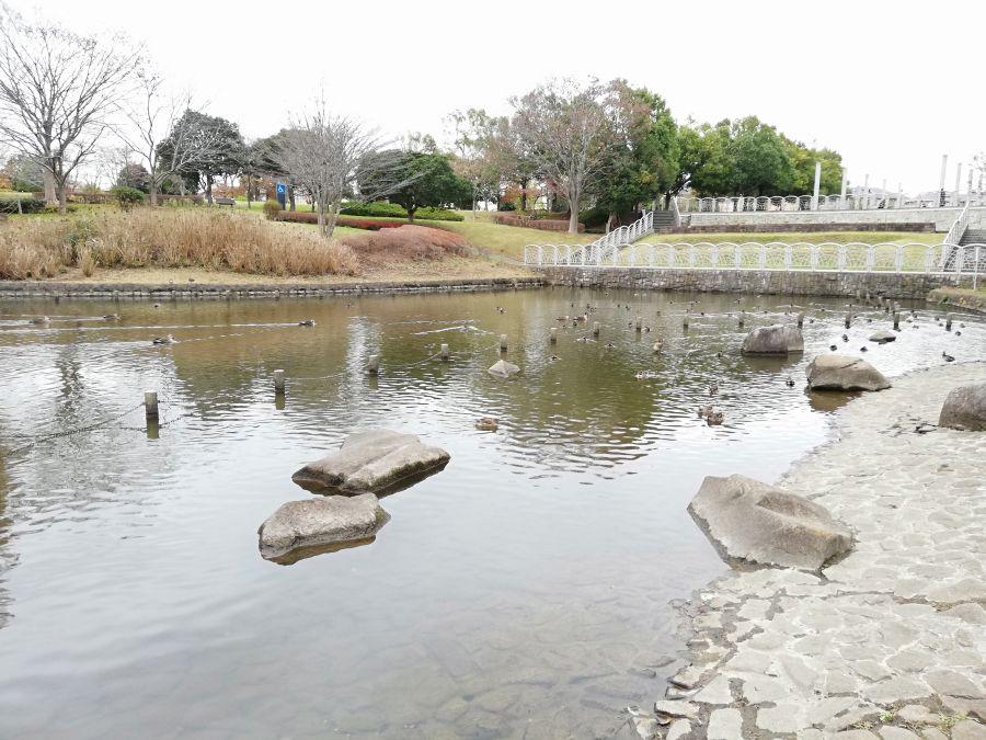 七井戸公園の池の水鳥