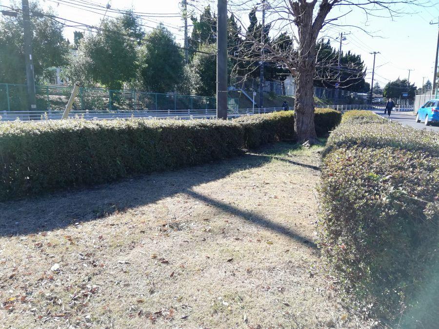井戸作南公園の植え込み