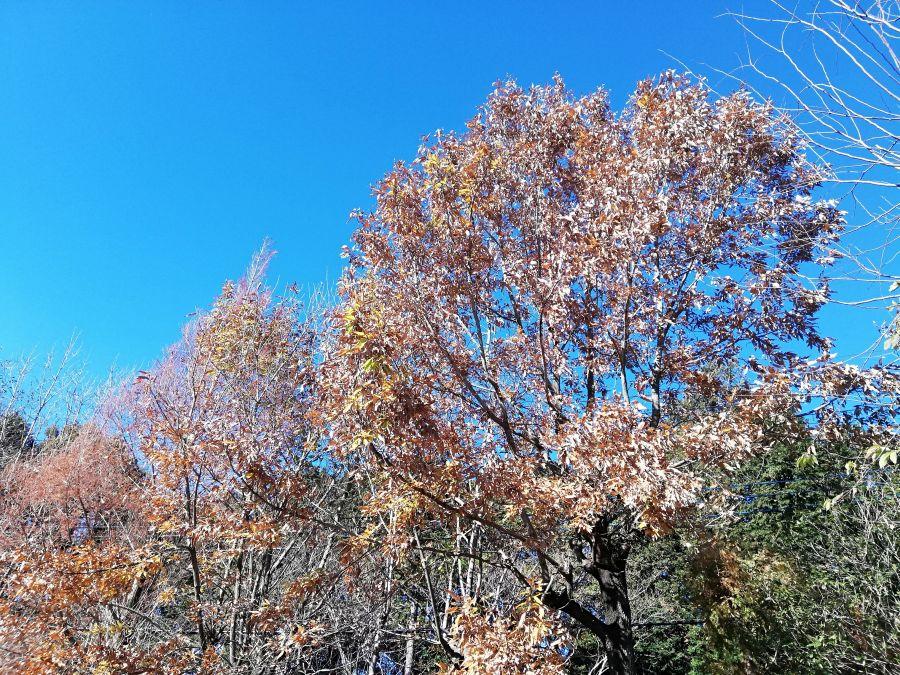 上新堀公園の落葉樹
