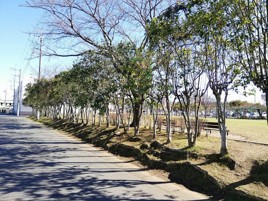 織戸公園の木々