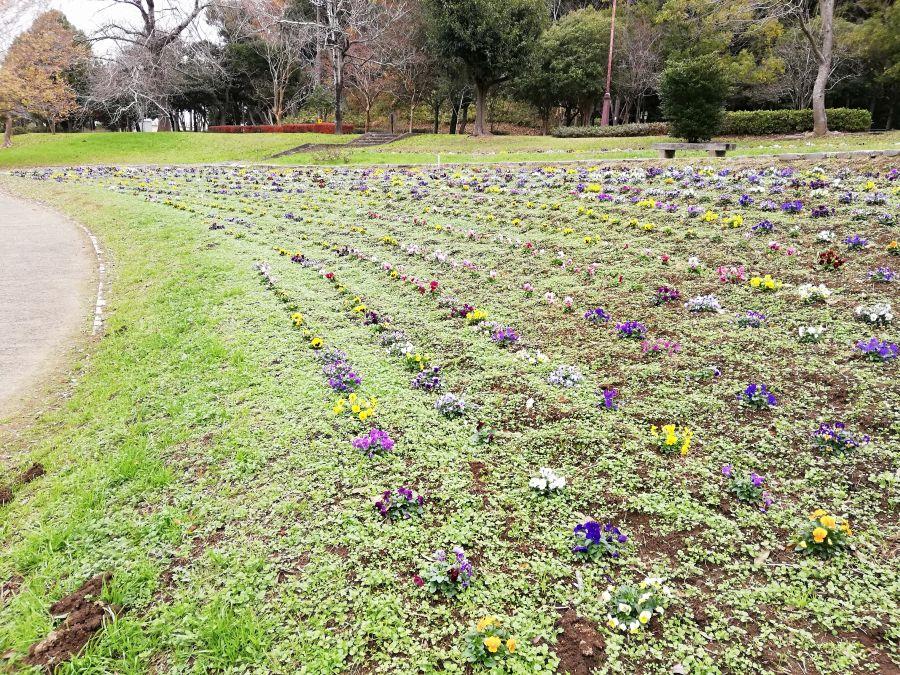 七井戸公園のお散歩道のお花