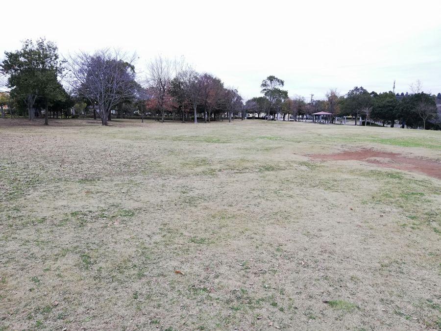 七井戸公園の芝生の広場