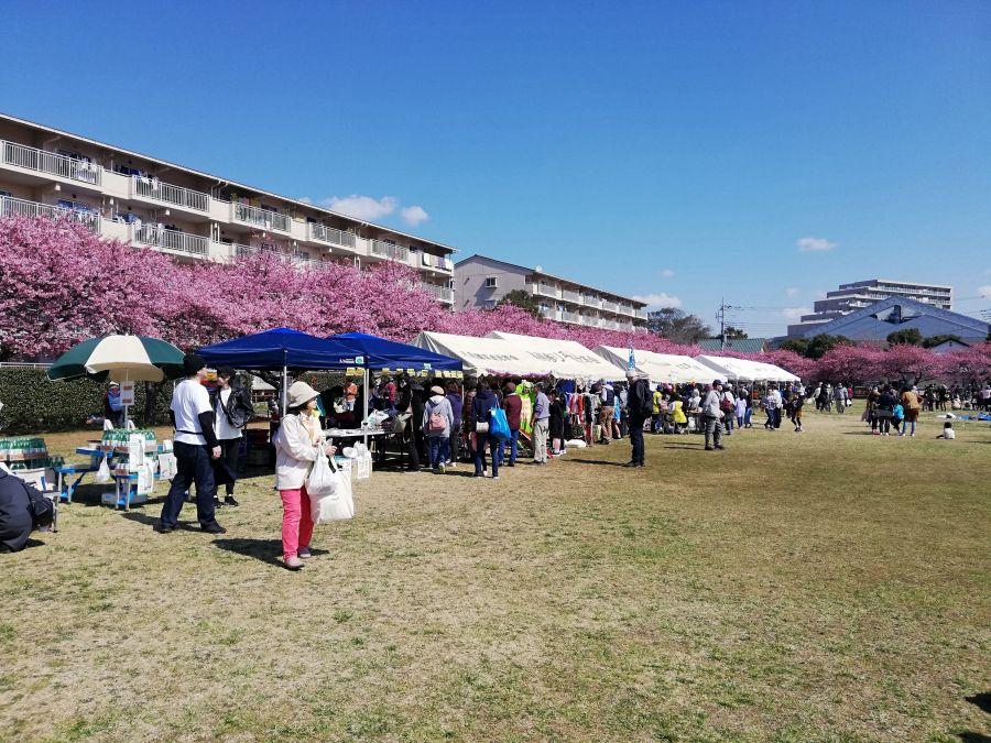 西志津河津桜まつり