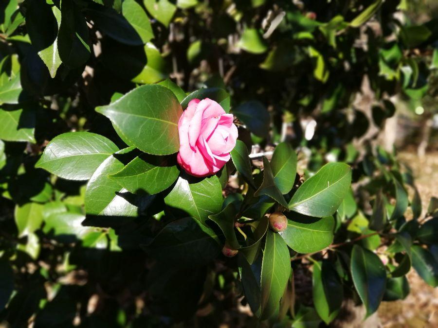 上新堀公園のお花