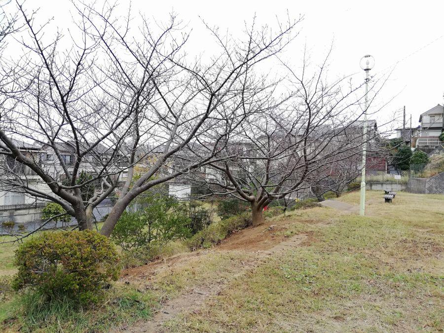 佐倉市千成2号公園は2段作り