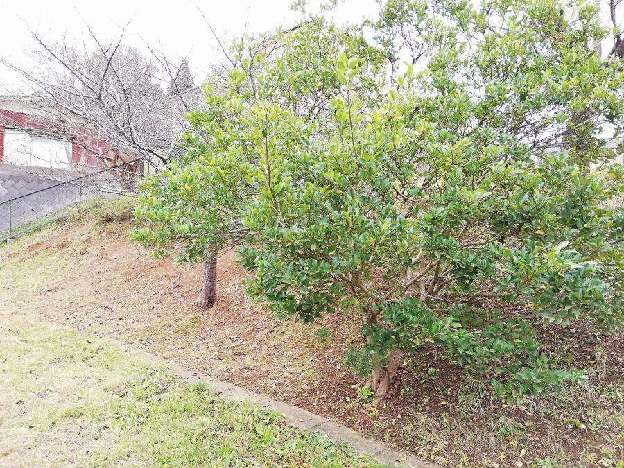 佐倉市千成2号公園の木々
