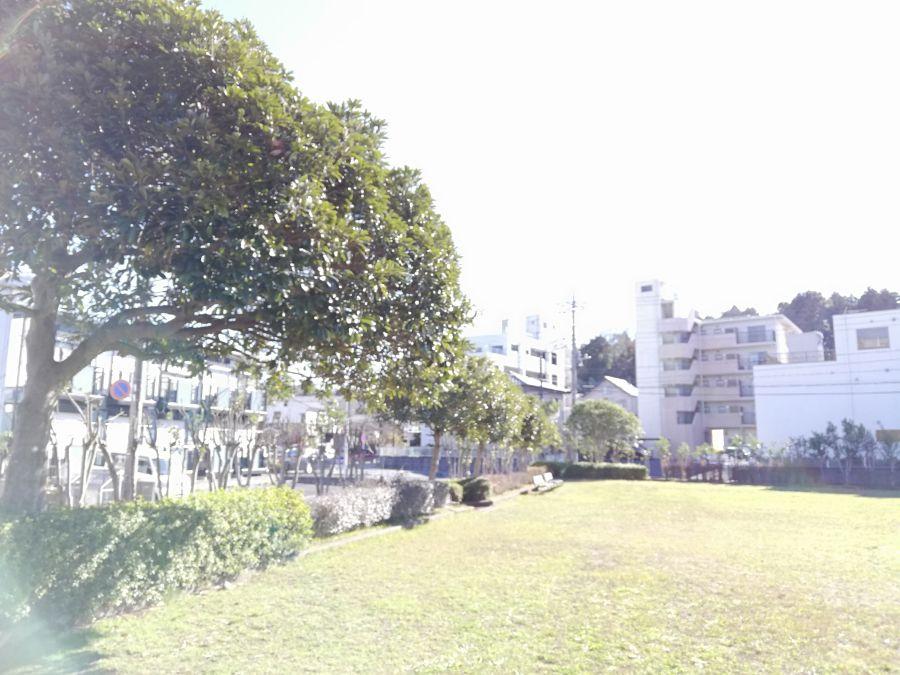 佐倉市 町田南公園の周りの木々