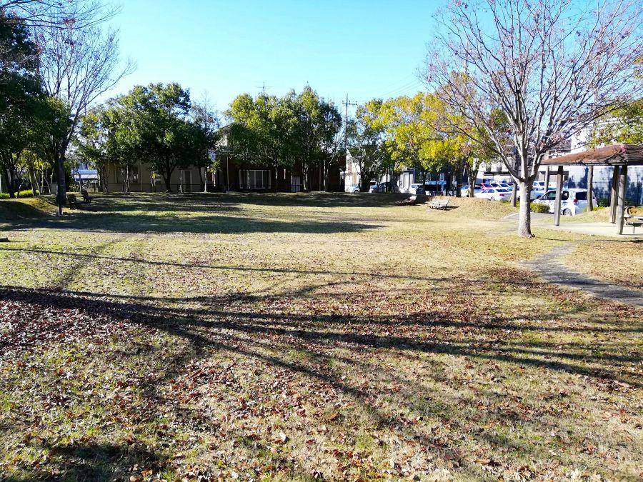 佐倉市 浅間前公園の芝生