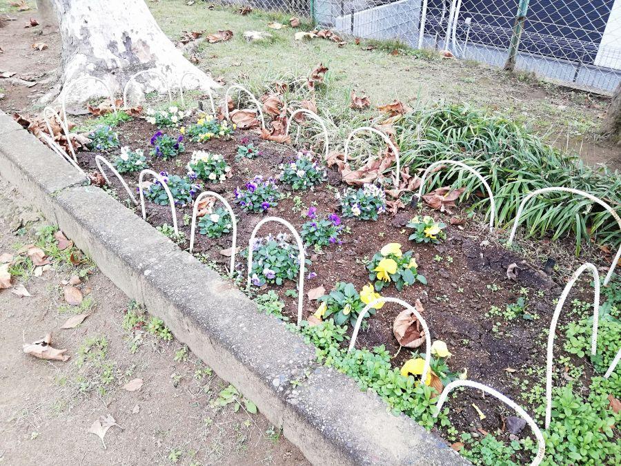 長谷津児童公園の花壇