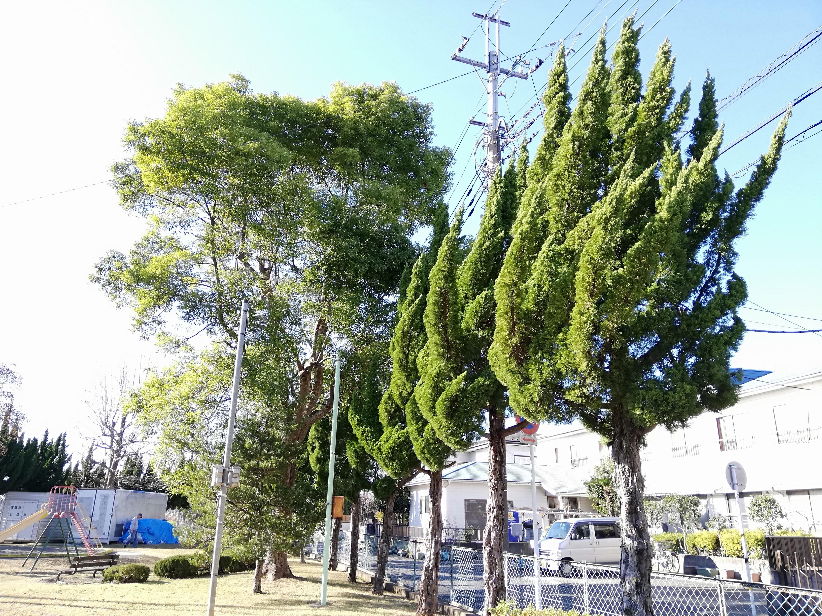 佐倉市 小沼児童公園の木々