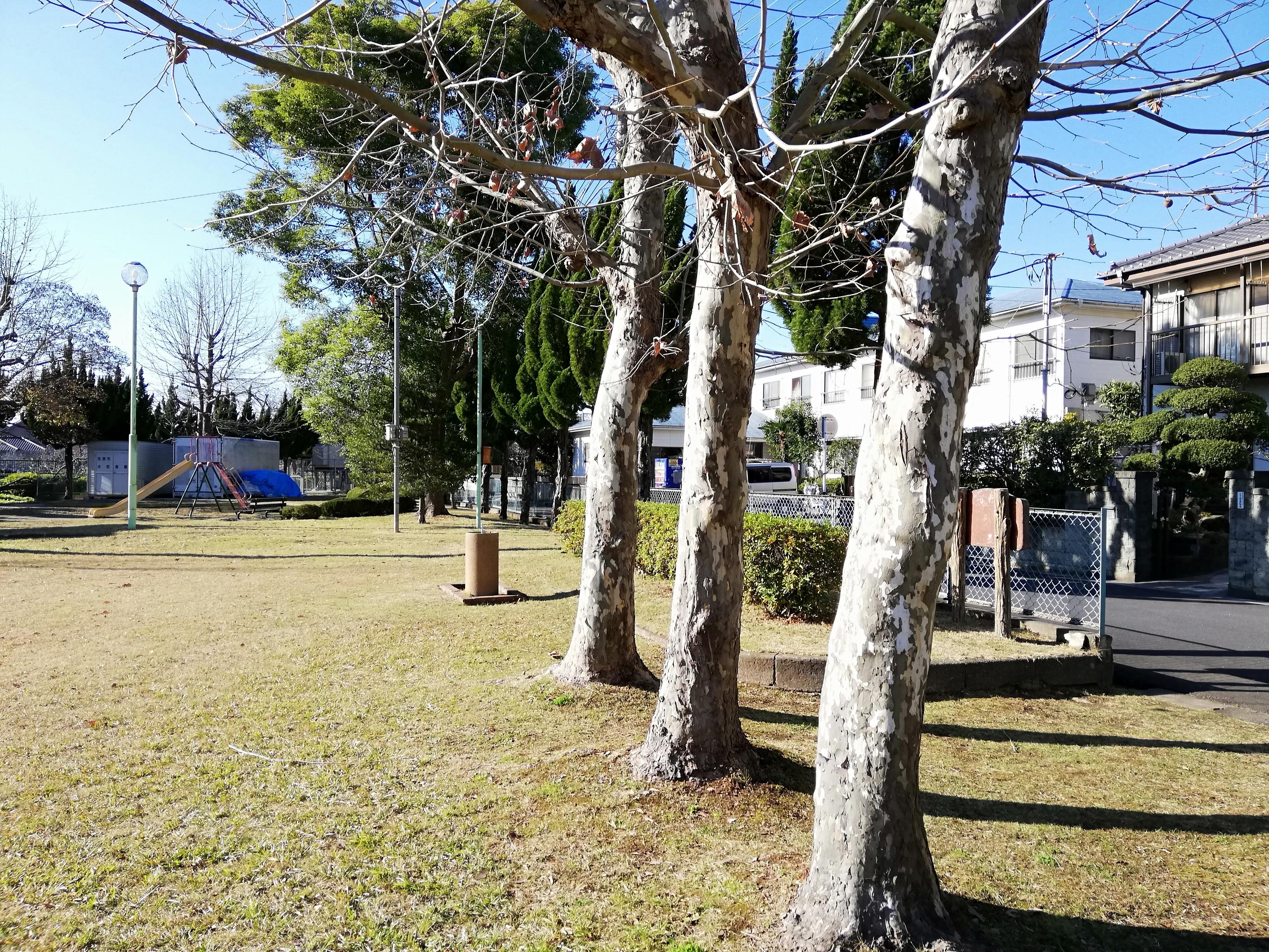 佐倉市 小沼児童公園の木