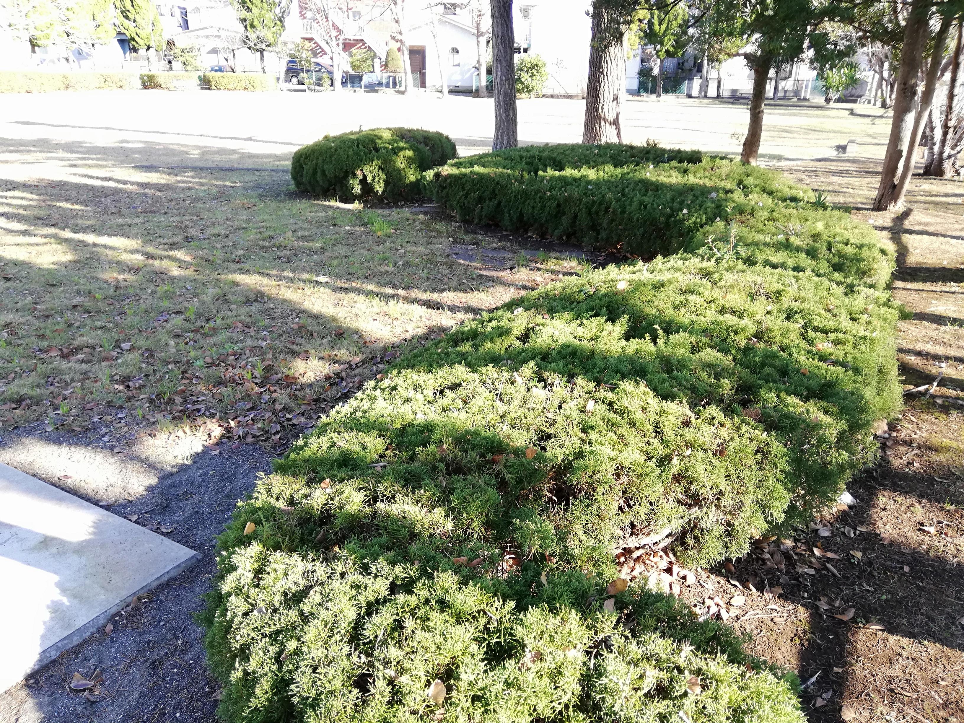 佐倉市 小沼児童公園の植え込み