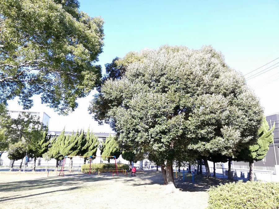 磯部児童公園の木々