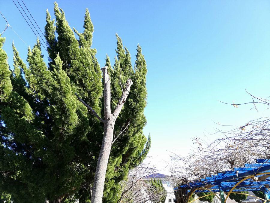 麦田児童公園の木々