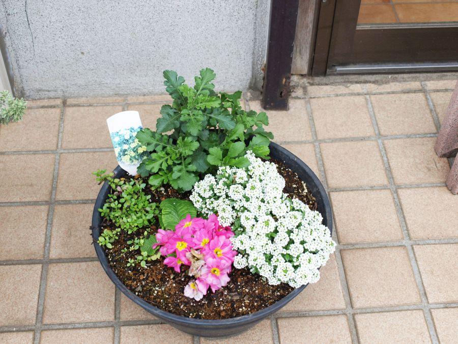 スリーエイトホーム お花
