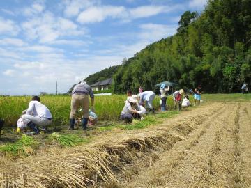 20190907くさぶえの丘稲刈り体験