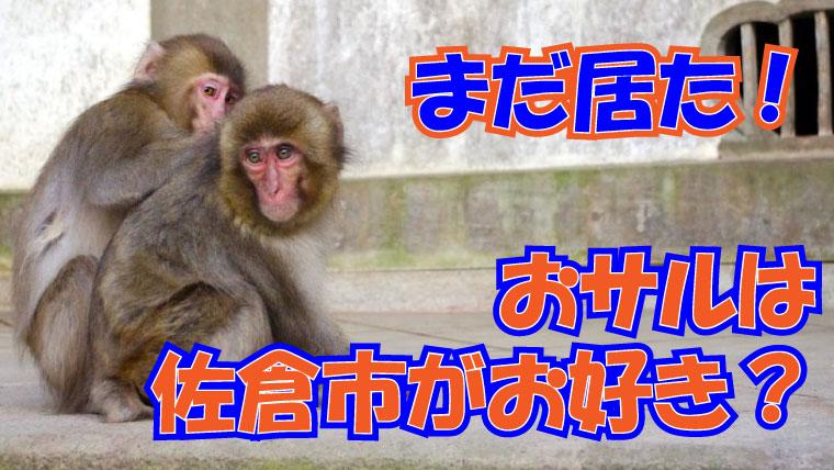 2020年7月17日 佐倉市 野生のサル目撃情報