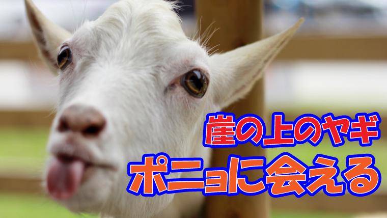 佐倉市 草ぶえの丘のヤギに崖の上のヤギ「ポニョ」が仲間入り 会える
