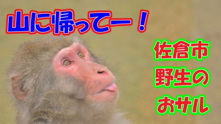 2020年8月 佐倉市 野生の猿