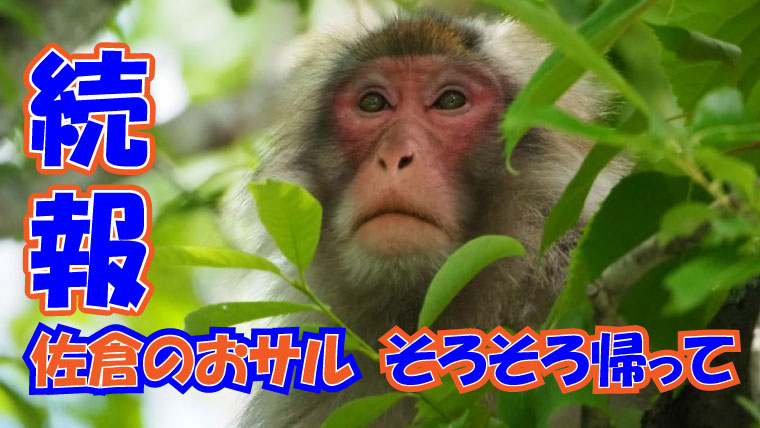 2020年9月18日【続報】佐倉市に出没する野生のおサル アイキャッチ画像