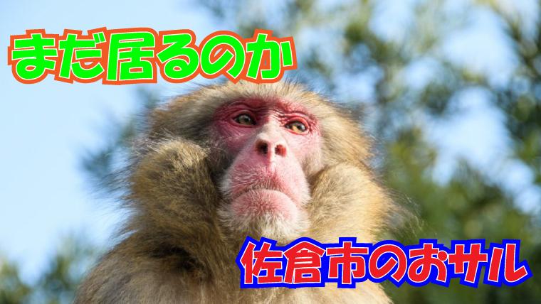 2020年9月7日 佐倉市 猿の目的情報 アイキャッチ