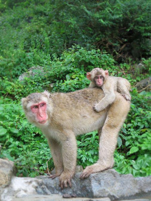 2020年10月23日 4日連続で出没 佐倉市に出没するサル 猿のイメージ画像
