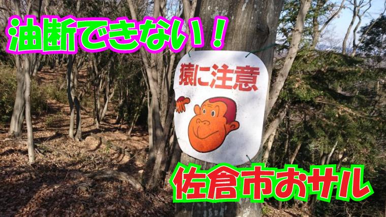 2020年10月1日 佐倉市 猿出没 アイキャッチ