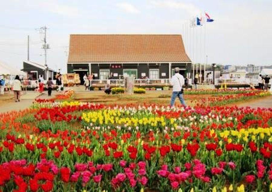 佐倉市 イルミネーションプロジェクト 時間延長をする佐蘭花の画像