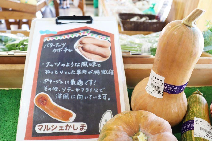 マルシェかしま 野菜 かぼちゃ バターナッツカボチャ
