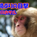 2020年11月18日 佐倉市 野生のサル目撃 アイキャッチ画像
