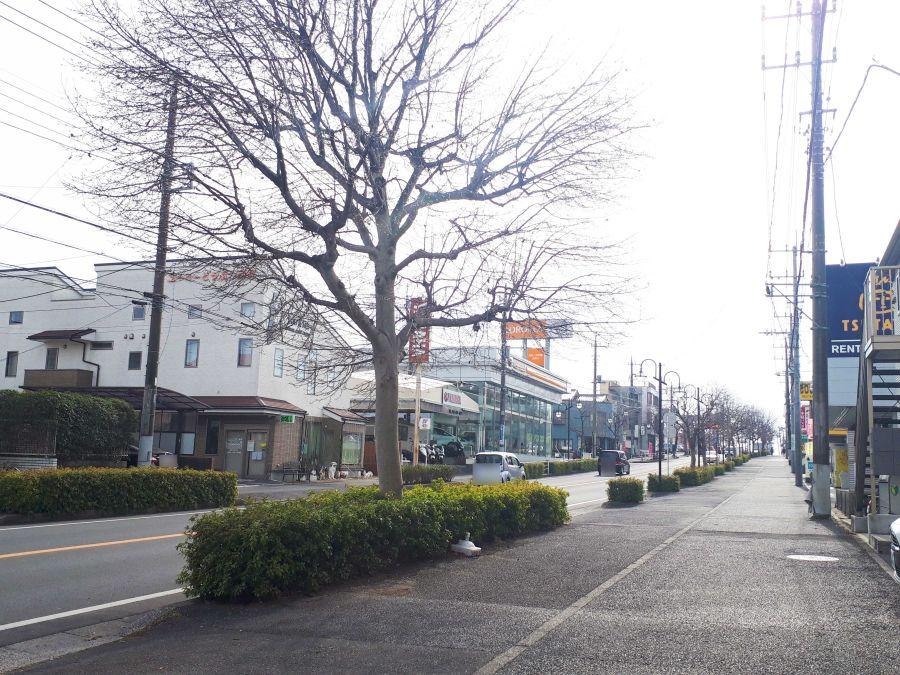 佐倉市 ラーメン まっこす 目の前の道路