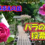佐倉草ぶえの丘バラ園 15周年 バラの名前投票 アイキャッチ
