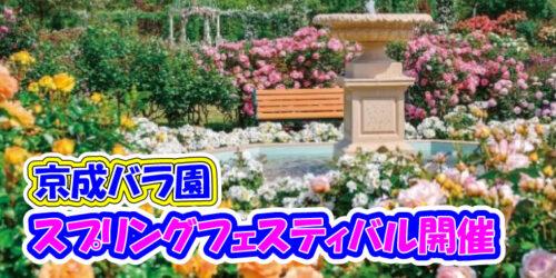 京成バラ園のイベント「スプリングフェスティバル It's so in Bloom!」4月23日(金)~6月13日(日)まで(八千代緑が丘駅/八千代市)