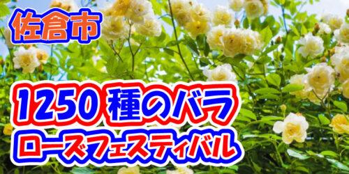 佐倉市 草ぶえの丘で『ローズ フェスティバル』を開催♪土日には臨時バスの運行もあります(京成佐倉駅・JR佐倉駅/佐倉市飯野)